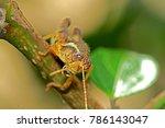 grasshopper on leaf | Shutterstock . vector #786143047