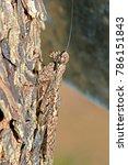grasshopper on tree | Shutterstock . vector #786151843