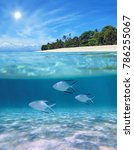 above and below sea surface... | Shutterstock . vector #786255067