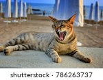 Stock photo cat at sea beach during vacation beautiful wildcat laying in beach three colored tabby wild cat 786263737