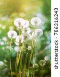 spring flowers background.... | Shutterstock . vector #786316243