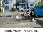 ajiro's stray cats | Shutterstock . vector #786343507