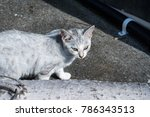 ajiro's stray cat | Shutterstock . vector #786343513
