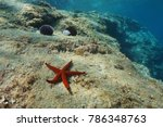 a red sea star on a rock... | Shutterstock . vector #786348763
