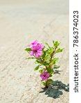 what a wonderful world  where... | Shutterstock . vector #786374023