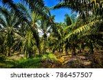 palm oil plantation | Shutterstock . vector #786457507