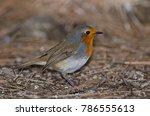 robin  erithacus rubecula... | Shutterstock . vector #786555613