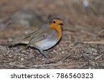 robin  erithacus rubecula... | Shutterstock . vector #786560323
