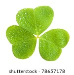 a clover, isolated on green - stock photo