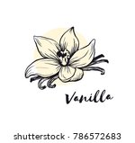 vanilla flower sketch ink... | Shutterstock .eps vector #786572683