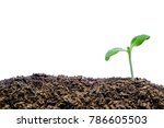 sprout growing from soil on... | Shutterstock . vector #786605503