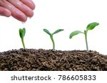 hand watering sprout growing... | Shutterstock . vector #786605833
