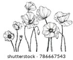 line art with poppies. black... | Shutterstock . vector #786667543