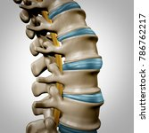 human spine anatomy section and ... | Shutterstock . vector #786762217