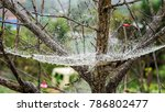 Giant Cobweb In Doi Mon Jam...