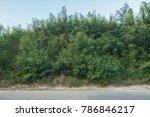 Density Green Bush With Blue Sky