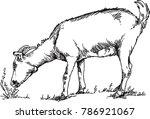 goat grazing grass | Shutterstock .eps vector #786921067