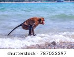 monkey playing on a beach in... | Shutterstock . vector #787023397