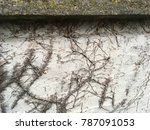 Small photo of Remnants of ivy left attached to the wall after being sprayed with weed killer.