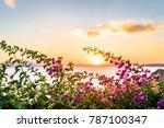flowerful big purple...   Shutterstock . vector #787100347