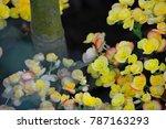 beautiful yellow violet | Shutterstock . vector #787163293