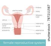 vector illustration of female... | Shutterstock .eps vector #787211587