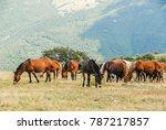 Herd Of Horses Grazing Grass ...