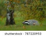 mammal in environment  rainy... | Shutterstock . vector #787220953