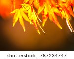 red maple leaves on the moss... | Shutterstock . vector #787234747