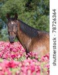 Portrait Of Nice Brown Horse