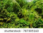 rainforest habitat in costa rica | Shutterstock . vector #787305163