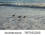 beach waves and water recession ... | Shutterstock . vector #787352203