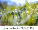 Small photo of Green grass in the rays of the bright sun. drops of dew on the summer trove.