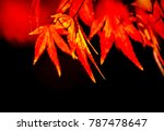 red maple leaves fall on the... | Shutterstock . vector #787478647