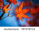 red maple leaves fall on the... | Shutterstock . vector #787478713