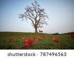 vietnam countryside landscape... | Shutterstock . vector #787496563