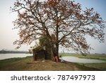 vietnam landscape. blossoming... | Shutterstock . vector #787497973