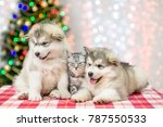 baby puppies with a kitten  on... | Shutterstock . vector #787550533