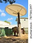 Zoo Elephant Cage