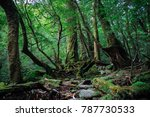 an ancient forest filled with... | Shutterstock . vector #787730533