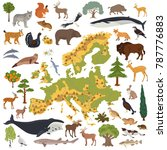 flat european flora and fauna... | Shutterstock .eps vector #787776883
