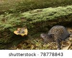 Box Turtle And Toad Meet At Th...