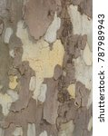 Small photo of Gradations of rind of a plane tree