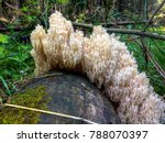 forest mushrooms on tree stump... | Shutterstock . vector #788070397