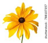 yellow rudbeckia flower... | Shutterstock . vector #788107357