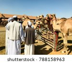 al ain camel market | Shutterstock . vector #788158963