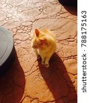 little golden and yellow cat in ... | Shutterstock . vector #788175163