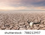 land with dry and cracked... | Shutterstock . vector #788212957