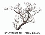 isolated tree on white... | Shutterstock . vector #788213107
