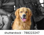 mountain domestic dog